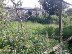 A photo before of overgrown garden
